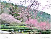 2016武陵賞櫻:nEO_IMG_328.jpg