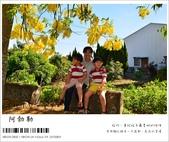 阿勃勒,台南賞花地點公開,初夏最金黃耀眼的綻放:nEO_IMG_20130602 272.jpg