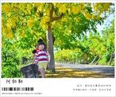阿勃勒,台南賞花地點公開,初夏最金黃耀眼的綻放:nEO_IMG_20130602 083.jpg