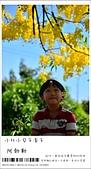阿勃勒,台南賞花地點公開,初夏最金黃耀眼的綻放:nEO_IMG_20130602 232.jpg