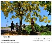 阿勃勒,台南賞花地點公開,初夏最金黃耀眼的綻放:nEO_IMG_20130602 113.jpg