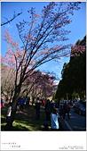 2016武陵賞櫻:nEO_IMG_011.jpg