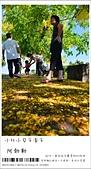 阿勃勒,台南賞花地點公開,初夏最金黃耀眼的綻放:nEO_IMG_20130602 195.jpg