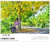 阿勃勒,台南賞花地點公開,初夏最金黃耀眼的綻放:nEO_IMG_20130602 085.jpg