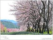 2016武陵賞櫻:nEO_IMG_360.jpg