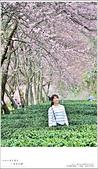 2016武陵賞櫻:nEO_IMG_377.jpg