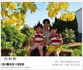 阿勃勒,台南賞花地點公開,初夏最金黃耀眼的綻放:nEO_IMG_20130602 273.jpg