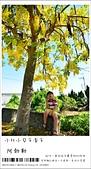 阿勃勒,台南賞花地點公開,初夏最金黃耀眼的綻放:nEO_IMG_20130602 233.jpg