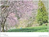 2016武陵賞櫻:nEO_IMG_370.jpg