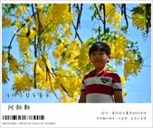 阿勃勒,台南賞花地點公開,初夏最金黃耀眼的綻放:nEO_IMG_20130602 123.jpg