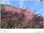2016武陵賞櫻:nEO_IMG_034.jpg
