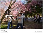 2016武陵賞櫻:nEO_IMG_016.jpg