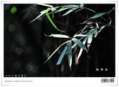 桃源谷大草原,享受大草原和山脊稜線風光:nEO_IMG_20121110 015.jpg
