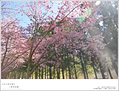 2016武陵賞櫻:nEO_IMG_018.jpg