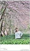 2016武陵賞櫻:nEO_IMG_378.jpg