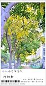 阿勃勒,台南賞花地點公開,初夏最金黃耀眼的綻放:nEO_IMG_20130602 1211.jpg