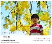 阿勃勒,台南賞花地點公開,初夏最金黃耀眼的綻放:nEO_IMG_20130602 129.jpg
