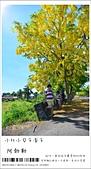 阿勃勒,台南賞花地點公開,初夏最金黃耀眼的綻放:nEO_IMG_20130602 087.jpg