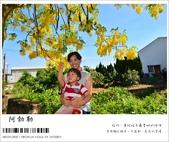 阿勃勒,台南賞花地點公開,初夏最金黃耀眼的綻放:nEO_IMG_20130602 281.jpg