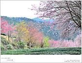 2016武陵賞櫻:nEO_IMG_330.jpg