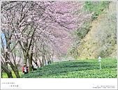 2016武陵賞櫻:nEO_IMG_373.jpg
