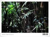桃源谷大草原,享受大草原和山脊稜線風光:nEO_IMG_20121110 016.jpg