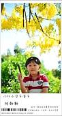 阿勃勒,台南賞花地點公開,初夏最金黃耀眼的綻放:nEO_IMG_20130602 236.jpg