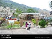 賞梅。臺中新社 梅林親水岸:nEO_IMG_20120115 018.jpg
