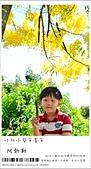阿勃勒,台南賞花地點公開,初夏最金黃耀眼的綻放:nEO_IMG_20130602 238.jpg