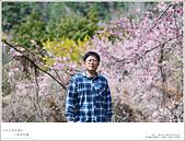 2016武陵賞櫻:nEO_IMG_317.jpg