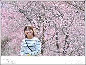 2016武陵賞櫻:nEO_IMG_384.jpg
