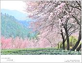 2016武陵賞櫻:nEO_IMG_355.jpg