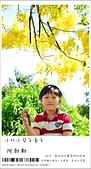 阿勃勒,台南賞花地點公開,初夏最金黃耀眼的綻放:nEO_IMG_20130602 240.jpg