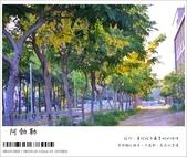 阿勃勒,台南賞花地點公開,初夏最金黃耀眼的綻放:nEO_IMG_20130602 1221.jpg