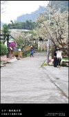 賞梅。臺中新社 梅林親水岸:nEO_IMG_20120115 020.jpg