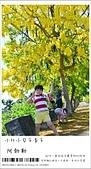 阿勃勒,台南賞花地點公開,初夏最金黃耀眼的綻放:nEO_IMG_20130602 093.jpg
