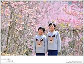2016武陵賞櫻:nEO_IMG_275.jpg