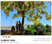 阿勃勒,台南賞花地點公開,初夏最金黃耀眼的綻放:nEO_IMG_20130602 135.jpg