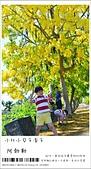 阿勃勒,台南賞花地點公開,初夏最金黃耀眼的綻放:nEO_IMG_20130602 094.jpg