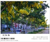 阿勃勒,台南賞花地點公開,初夏最金黃耀眼的綻放:nEO_IMG_20130602 1224.jpg