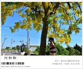 阿勃勒,台南賞花地點公開,初夏最金黃耀眼的綻放:nEO_IMG_20130602 245.jpg