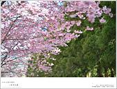 2016武陵賞櫻:nEO_IMG_029.jpg