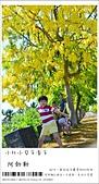 阿勃勒,台南賞花地點公開,初夏最金黃耀眼的綻放:nEO_IMG_20130602 096.jpg