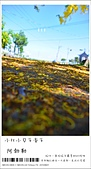 阿勃勒,台南賞花地點公開,初夏最金黃耀眼的綻放:nEO_IMG_20130602 295.jpg