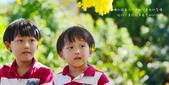 阿勃勒,台南賞花地點公開,初夏最金黃耀眼的綻放:1.jpg