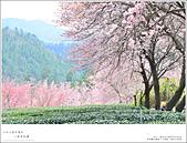 2016武陵賞櫻:nEO_IMG_354.jpg