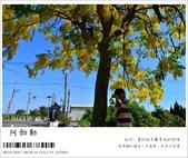阿勃勒,台南賞花地點公開,初夏最金黃耀眼的綻放:nEO_IMG_20130602 246.jpg