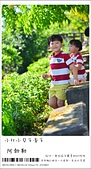 阿勃勒,台南賞花地點公開,初夏最金黃耀眼的綻放:nEO_IMG_20130602 386.jpg