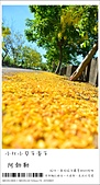 阿勃勒,台南賞花地點公開,初夏最金黃耀眼的綻放:nEO_IMG_20130602 296.jpg
