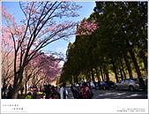 2016武陵賞櫻:nEO_IMG_013.jpg
